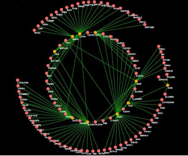 Gene interplay graph.jpg