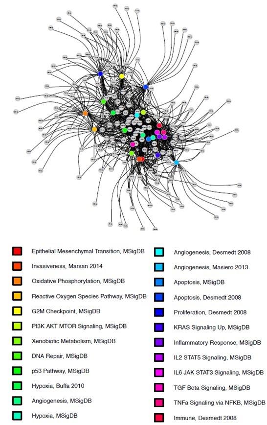 Network of miRNA.jpg